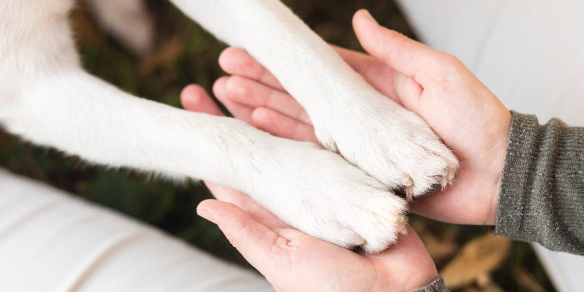 5 cách vượt qua nỗi đau mất thú cưng
